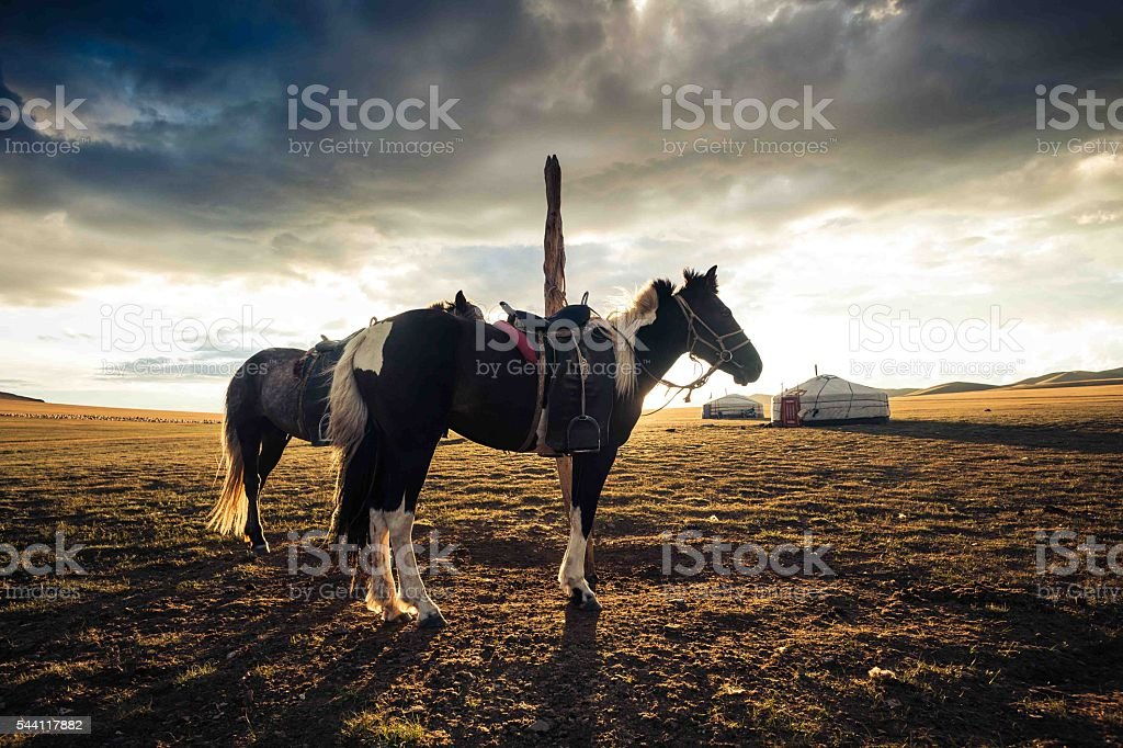 Horses and yurt at sunset in Mongolia stock photo