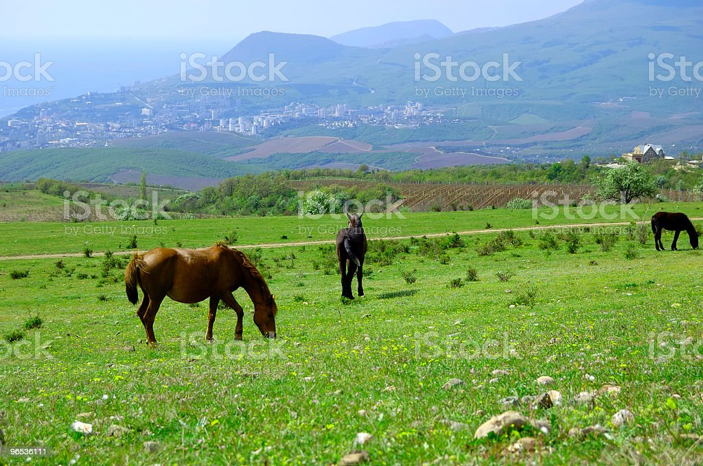 Horses at a mountain foot royalty-free stock photo