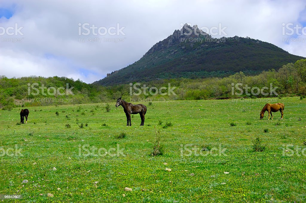 Horses at a mountain foot - 免版稅克里米亞圖庫照片