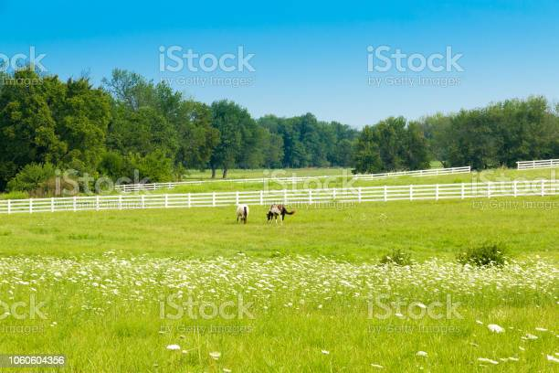 Photo of Horses at green pastures of horse farms. Country summer landscape.