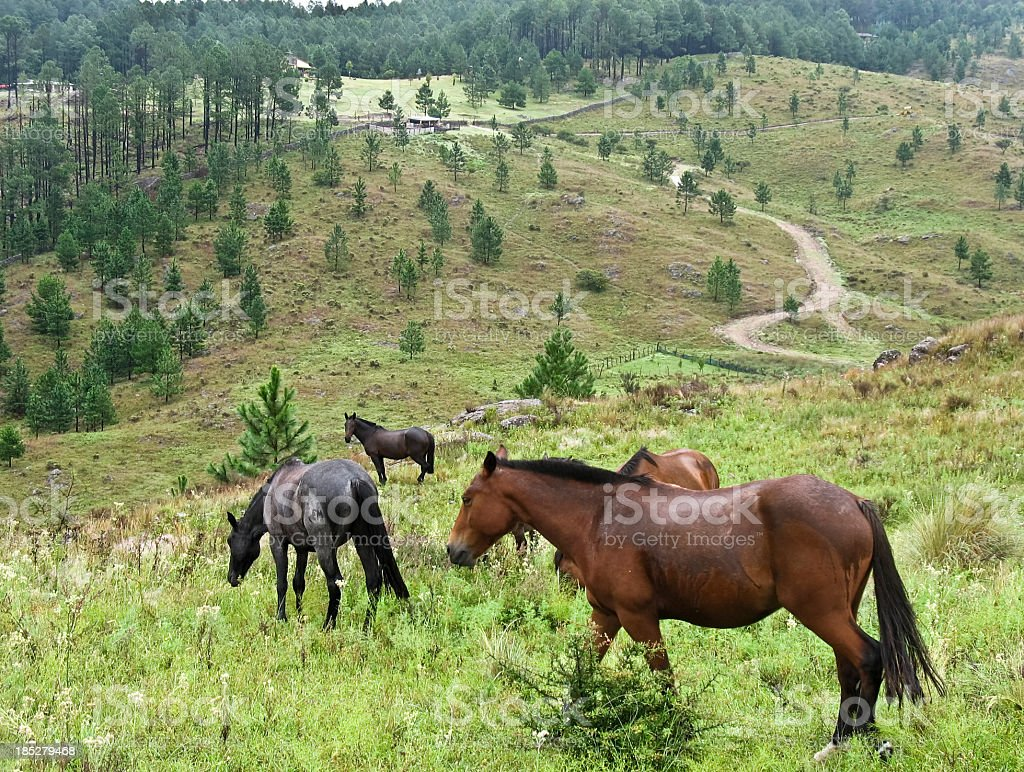 Horses at hills stock photo
