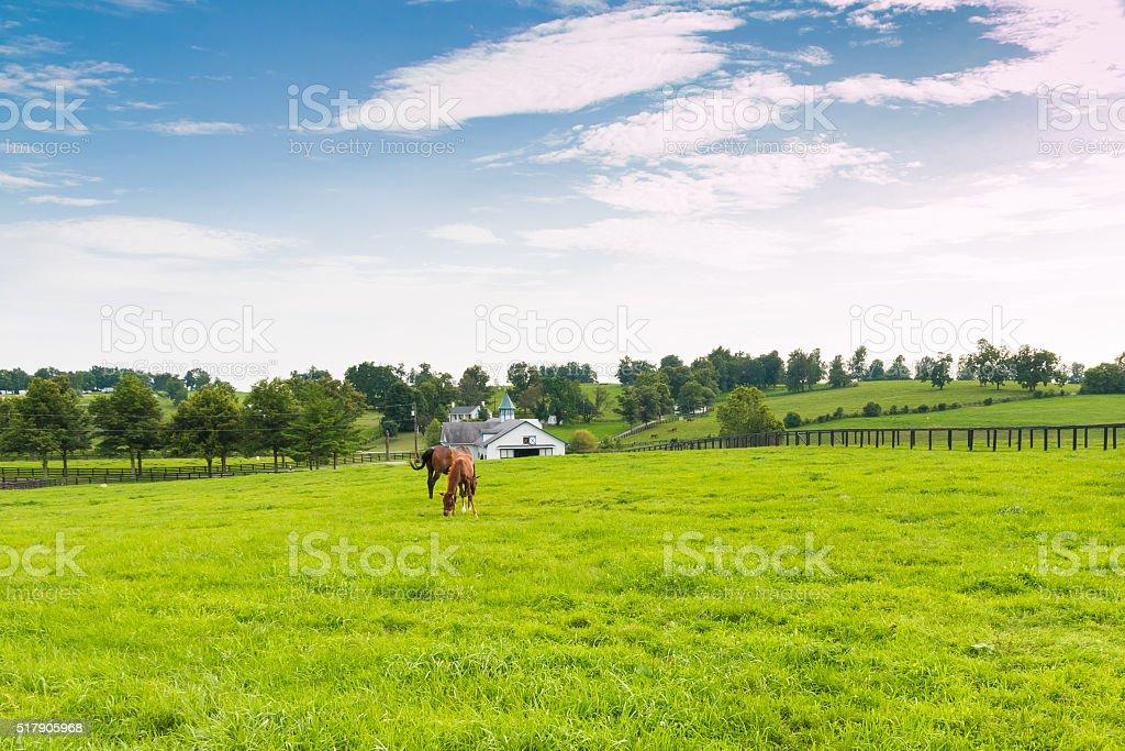 Pferde auf horse farm.  Land Landschaft. – Foto