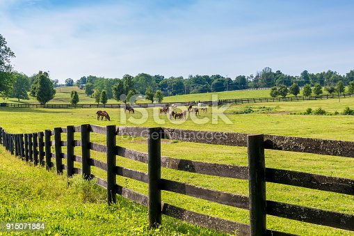 istock Horses at horse farm. Country landscape. 915071884