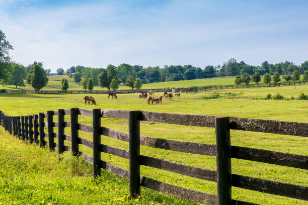 horses at horse farm. country landscape. - horse stock pictures, royalty-free photos & images