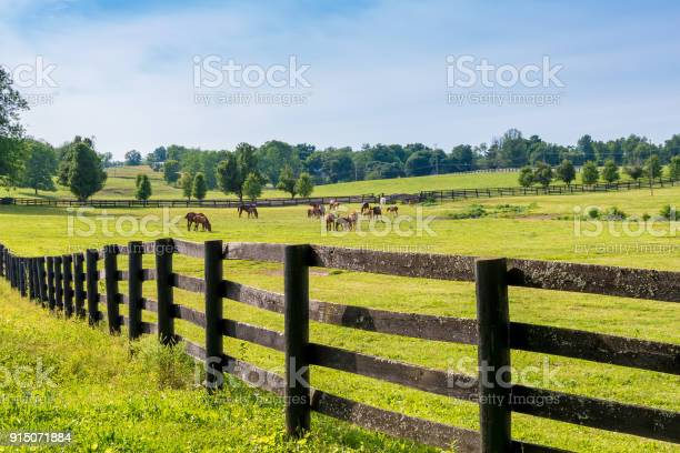 Photo of Horses at horse farm. Country landscape.