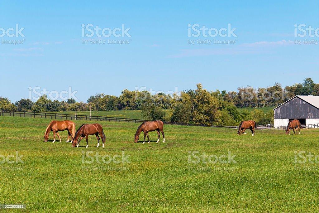 Pferde auf horse farm. – Foto