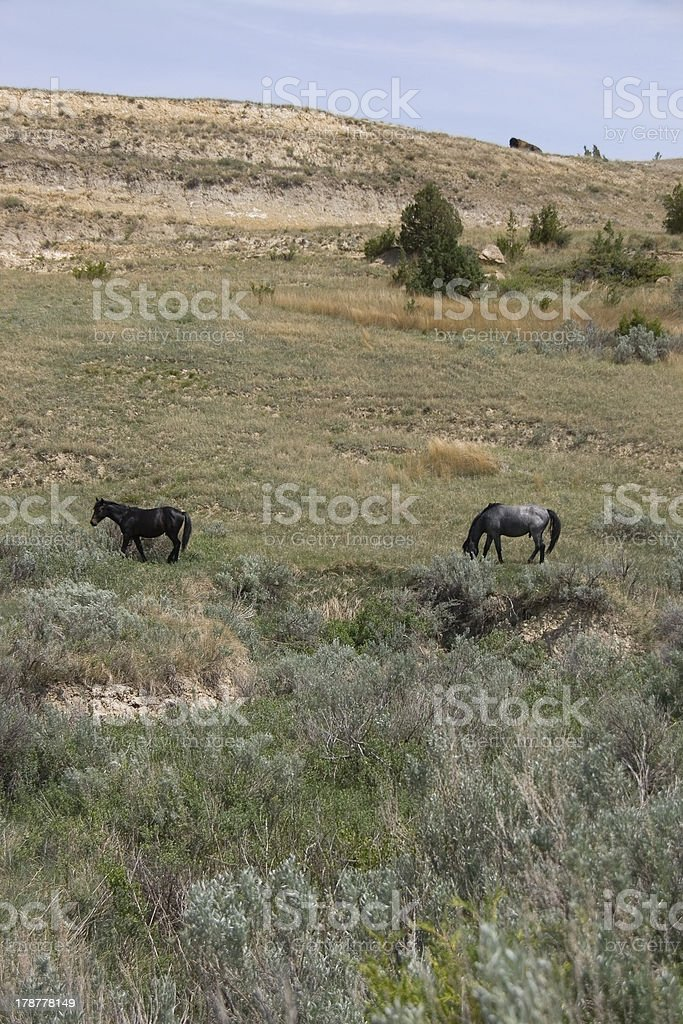 Horses At Roosevelt NP royalty-free stock photo