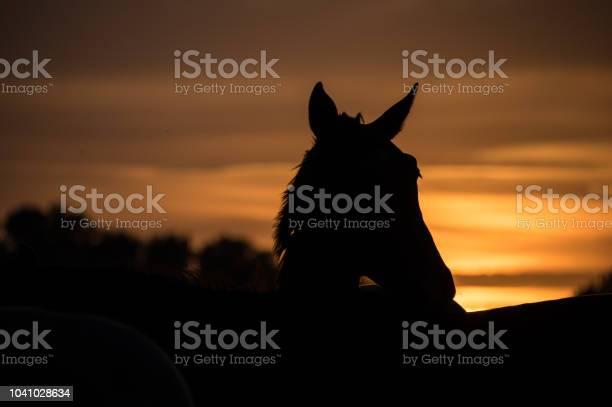 Photo of Horses at sunset
