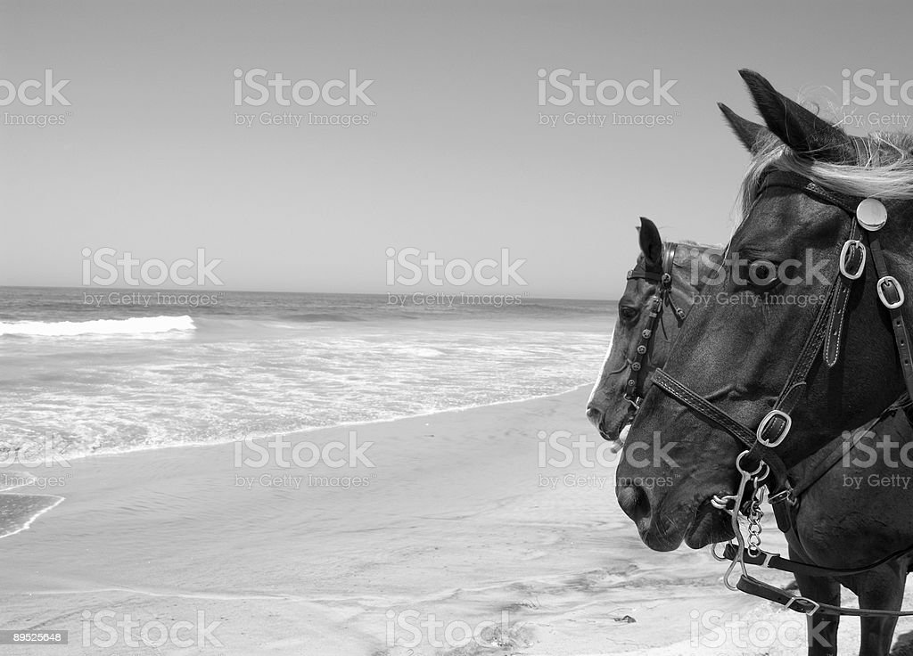 Лошади на пляже Стоковые фото Стоковая фотография