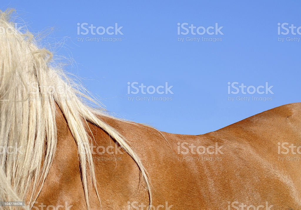 Horse's back stock photo