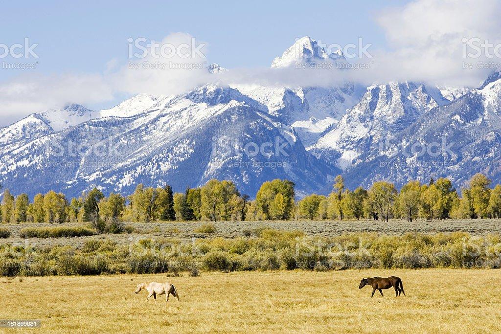 Horses before Grand Teton range royalty-free stock photo