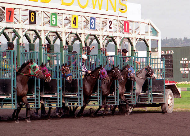 horses being let out of a gate during a race on a track - racehorse track bildbanksfoton och bilder