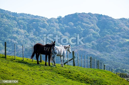 2 horses Black and brown color standing on the green grassland in front of the fence. Agriculture and livestock among the mountain.