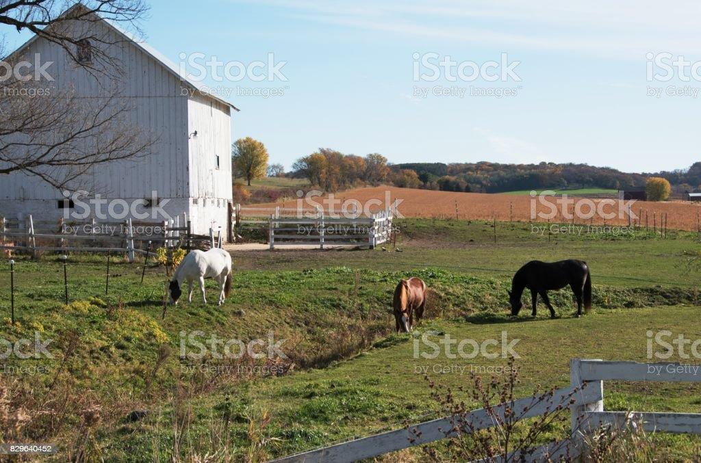 Pferde von Scheune – Foto