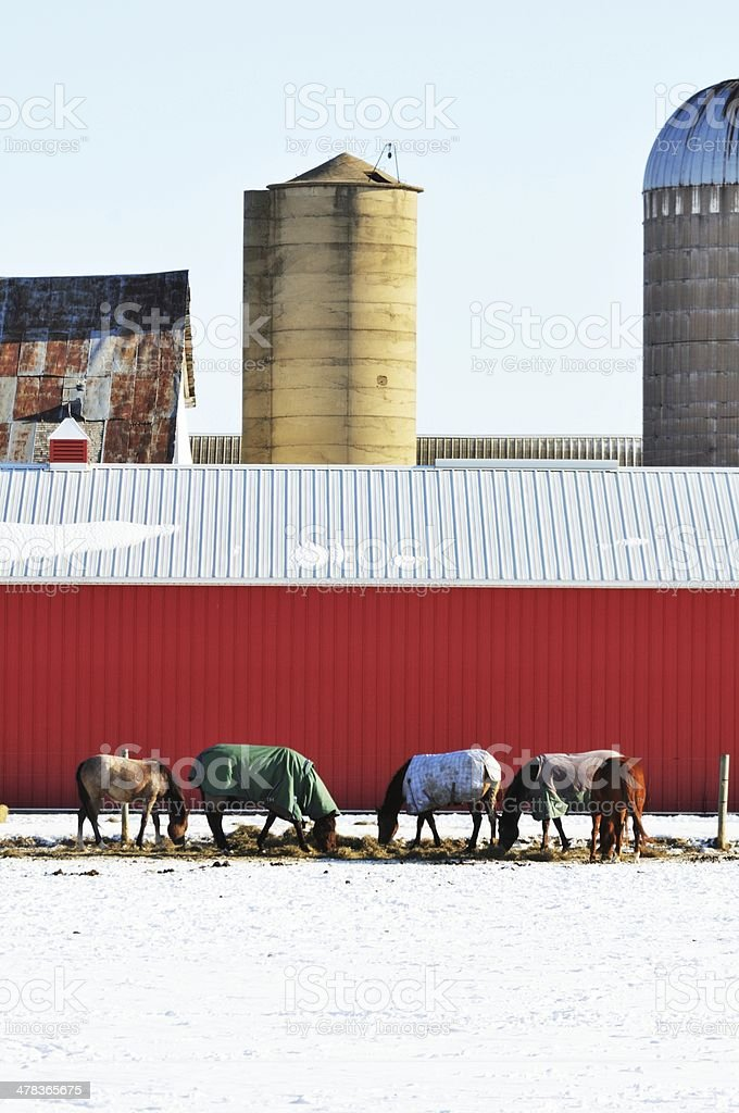 Horses by Red Barn stock photo