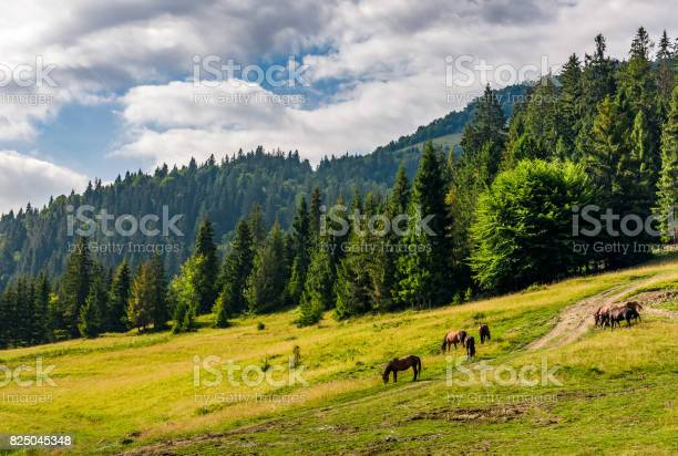Photo of Horses by the road near the forest