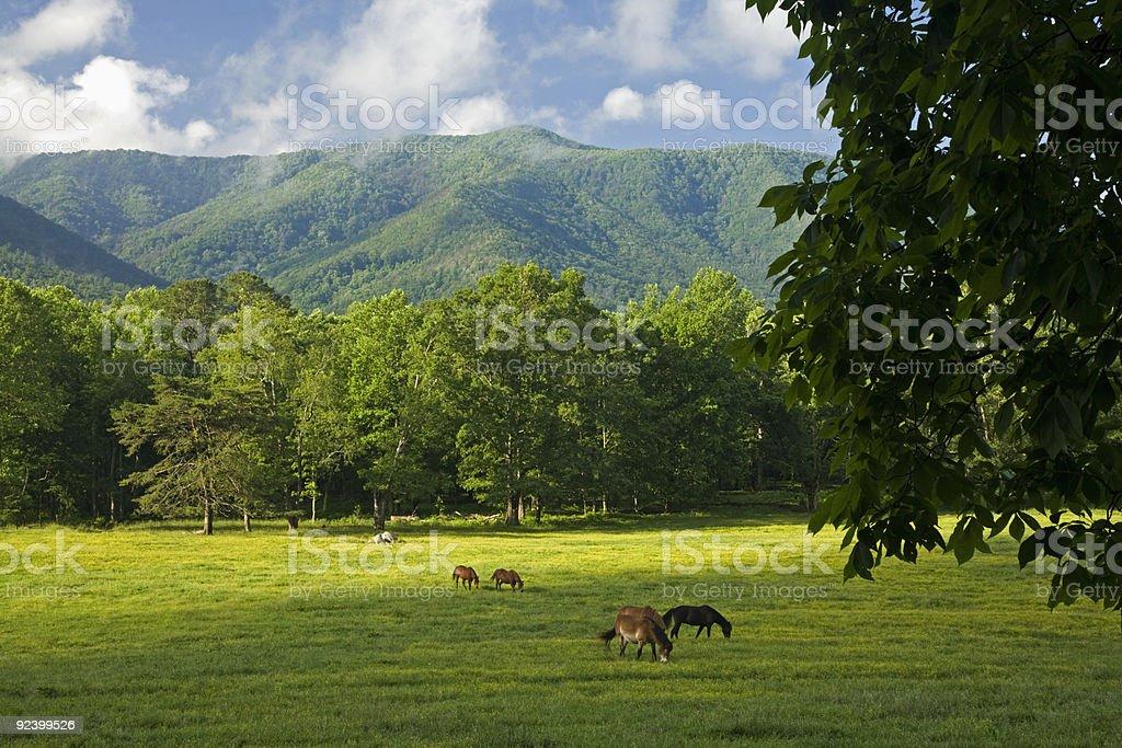 Horses, Cades Cove, Great Smoky Mtns Nat Park, TN stock photo