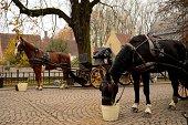 Horses, carriage on cobbled street: Brugge, Belgium
