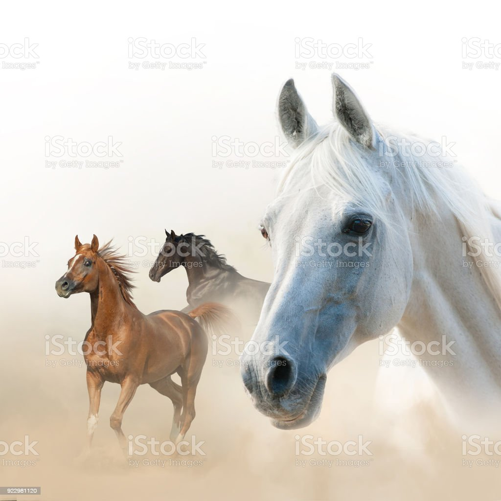 Horses concept: White, raven and chestnut stock photo
