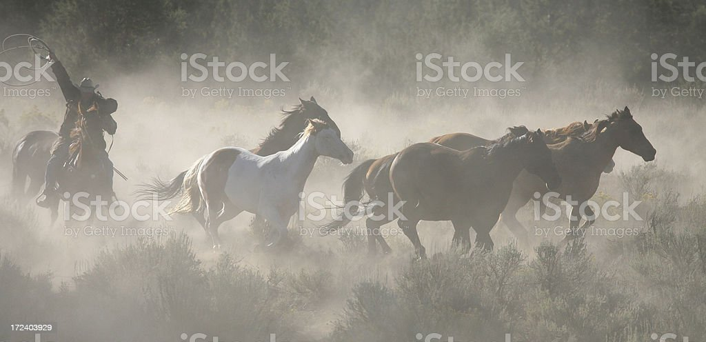 Horses Cowboys and Wranglers series 3 royalty-free stock photo