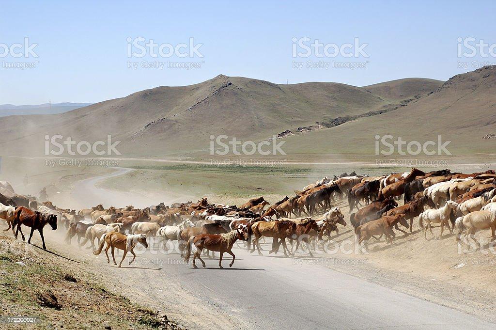 horses crossing the road royalty-free stock photo