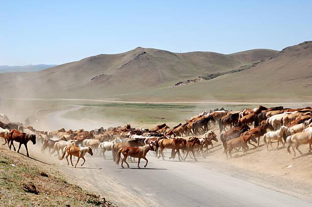 Horses crossing the road picture id172200027?b=1&k=6&m=172200027&s=612x612&w=0&h=k nq734w2nxv0haoqzbttic5cc ggnzbfkomegfpcho=