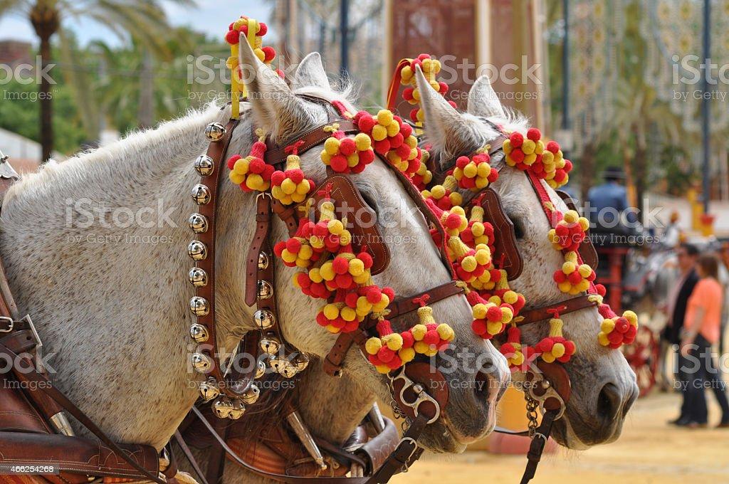 Horses decked in fair, Jerez de la Frontera stock photo