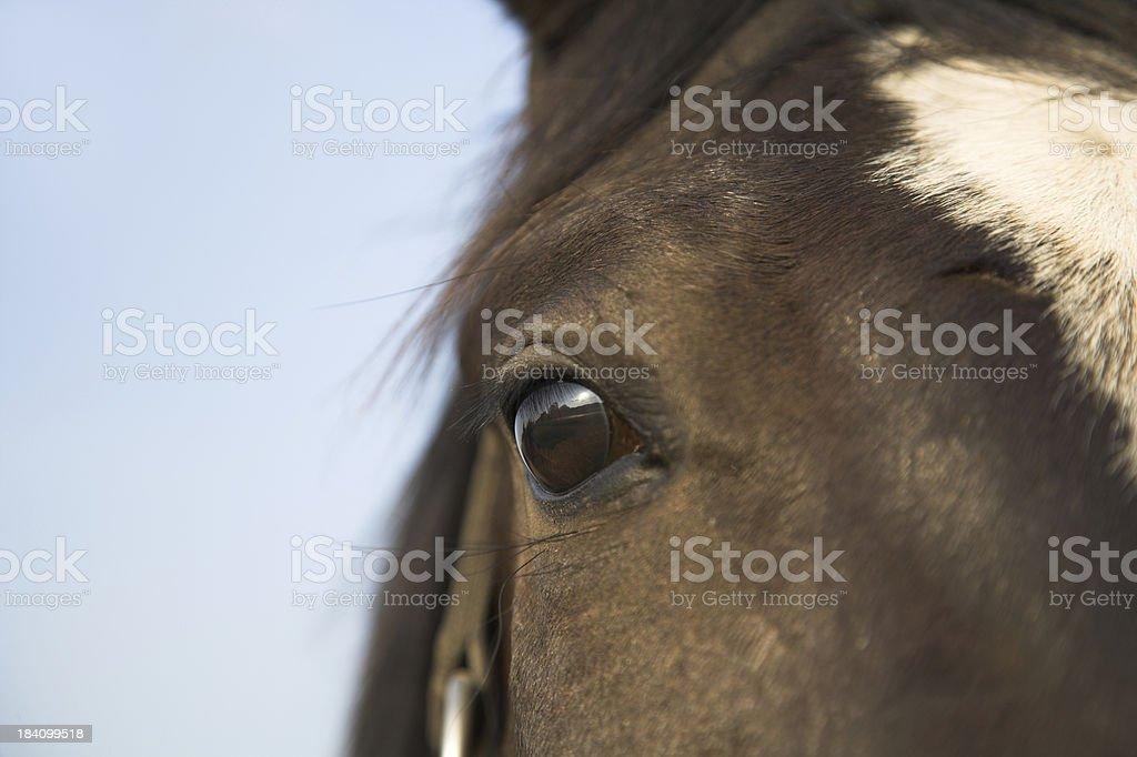 Horses Eye stock photo