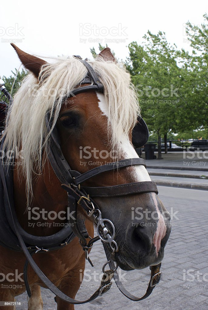 Horse's face royalty-free stock photo
