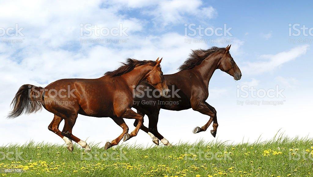 Pferde galoppieren in einem Feld – Foto