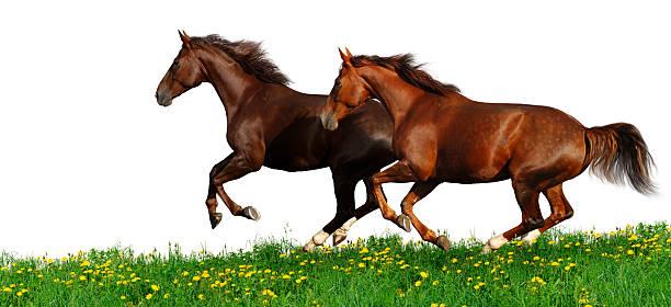 Horses gallop picture id176907040?b=1&k=6&m=176907040&s=612x612&w=0&h=upn phrpuvddi0i rqjaaobxt2hssggnihcsm sc4yy=
