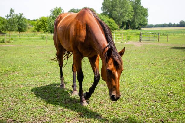 A Horses Glow stock photo