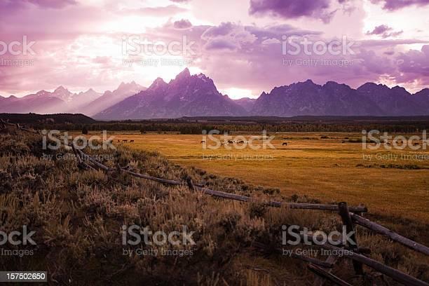 Photo of Horses graze at Sunset on the Tetons