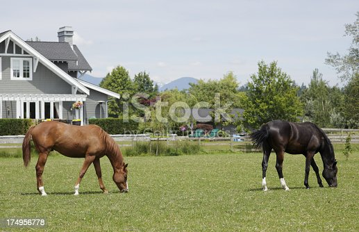 istock Horses grazing in a park in Vancouver, Canada 174956778