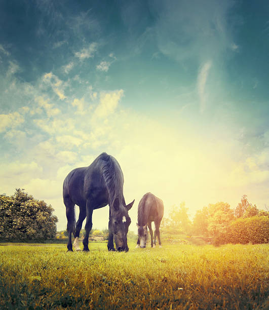 Horses grazing in autumn meadow on background of  sky stock photo