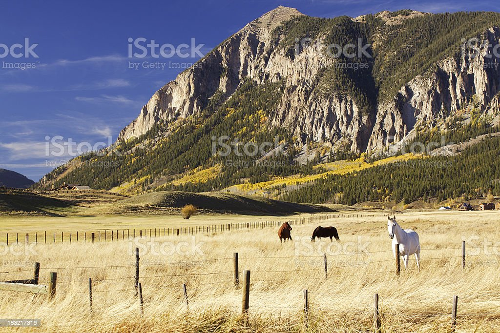 Horses grazing in Crested Butte Colorado stock photo