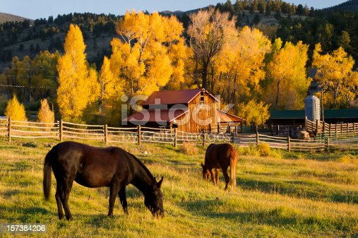 Horses grazing in front of a barn in colorado.