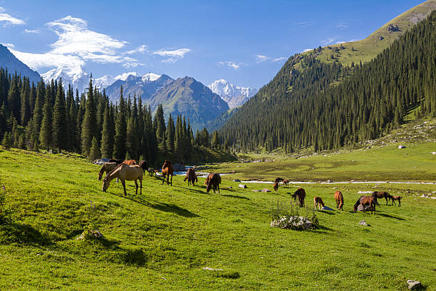 Horses grazing in mountains stock photo