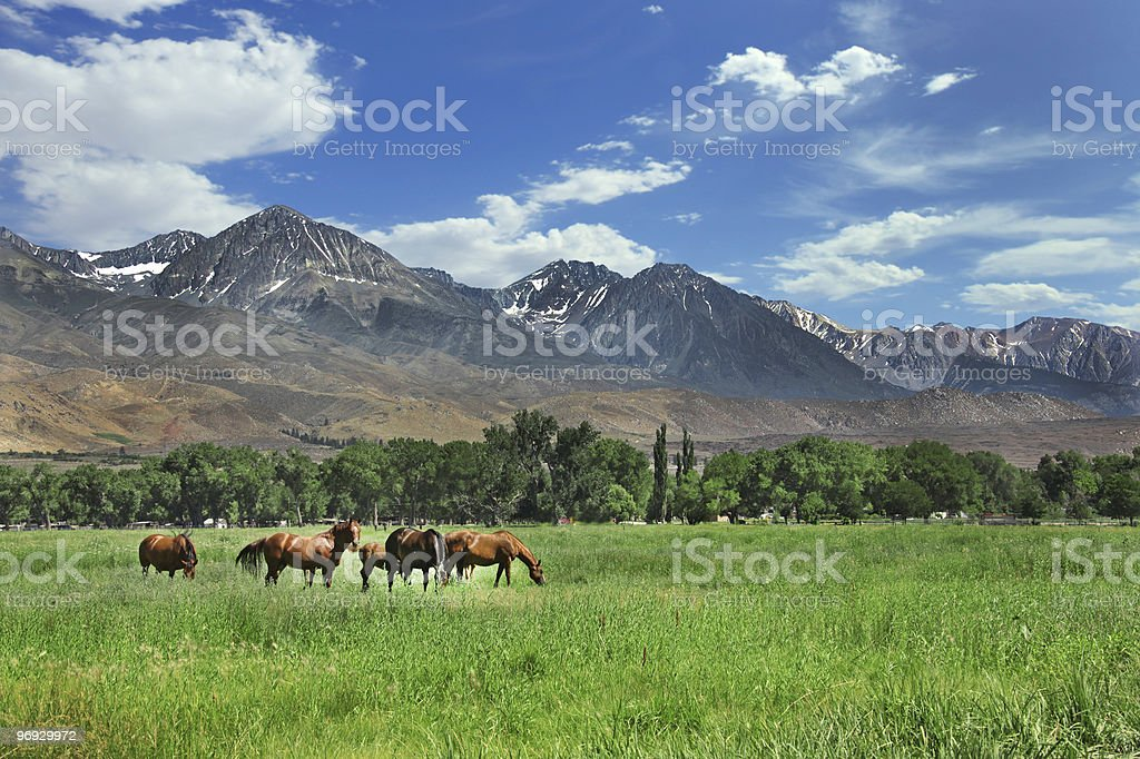 Horses Grazing in the Mountain Meadows royalty-free stock photo