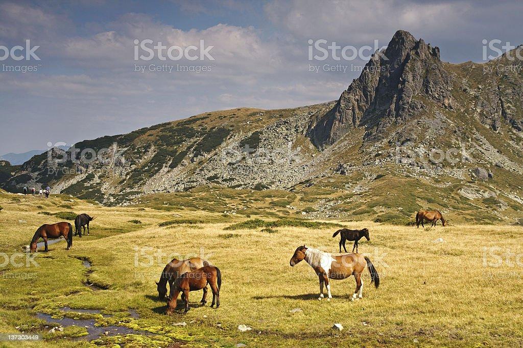 Horses grazing in the Rila Mountains, Bulgaria stock photo
