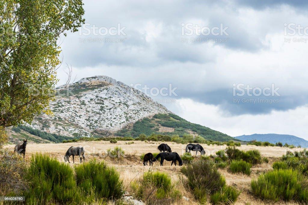 馬の牧草地に放牧 - からっぽのロイヤリティフリーストックフォト