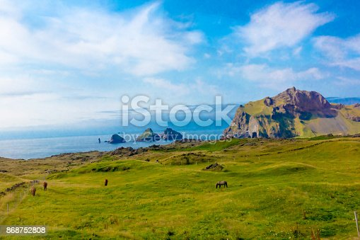 istock Horses grazing on farmland in Heimaey, Westman Islands, Iceland 868752808