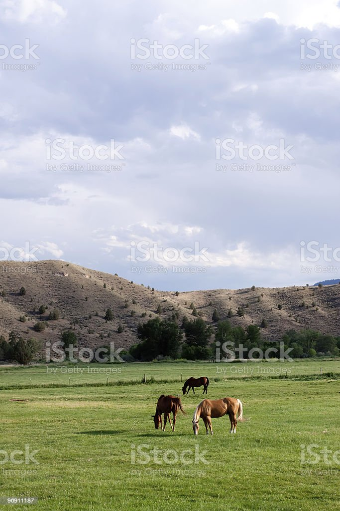 Horses grazing on open farmland royalty-free stock photo