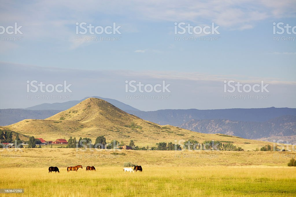 Horses Grazing on Ranch royalty-free stock photo