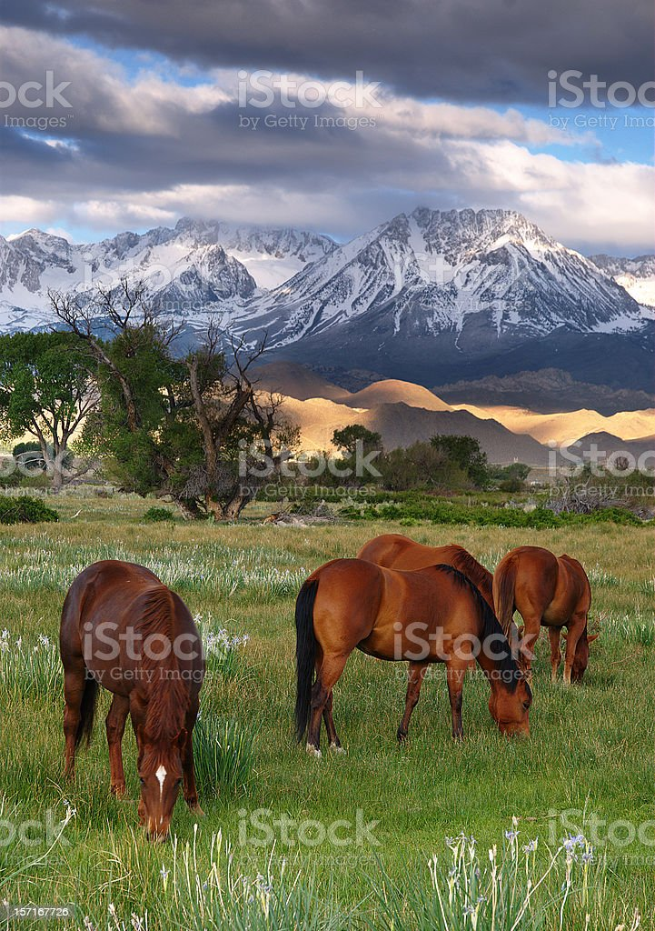 Horses grazing royalty-free stock photo