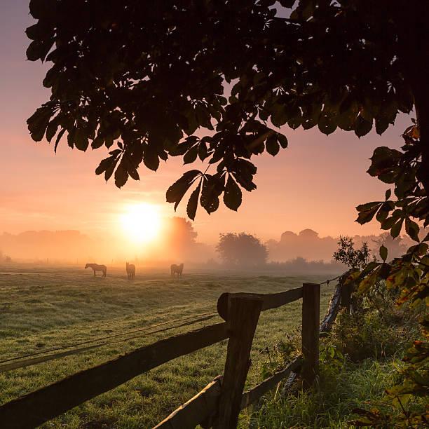 Pferde Grasen auf der Wiese auf einem nebligen Morgen – Foto