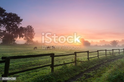 istock Horses grazing the grass on a foggy morning 503804250