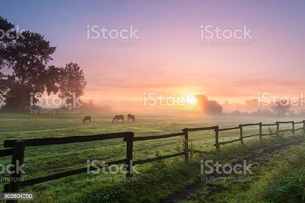 Photo of Horses grazing the grass on a foggy morning