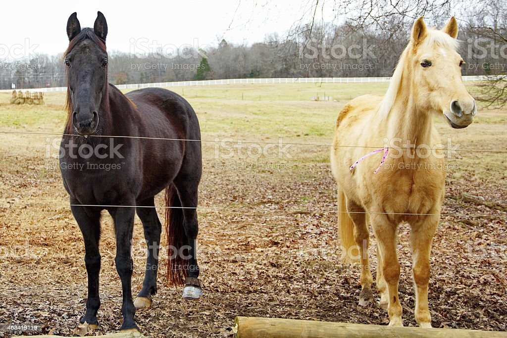 Horses greeting over the fence. stock photo