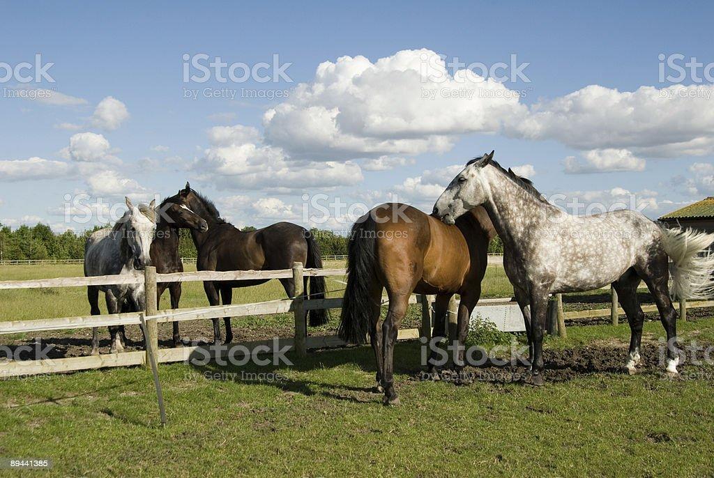 Cavalli cura di ogni altro foto stock royalty-free